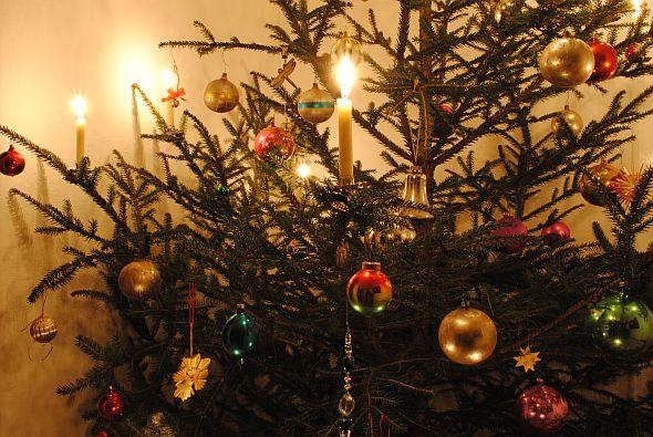 Entsorgung von Weihnachtsbäumen